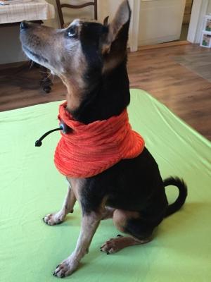 Halssocke am Hund